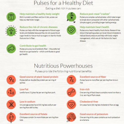 Pulses Infographic